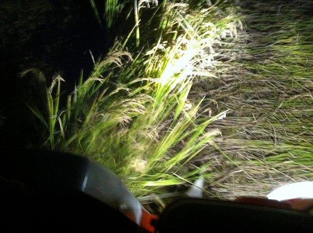 2012年ササシグレ稲刈り