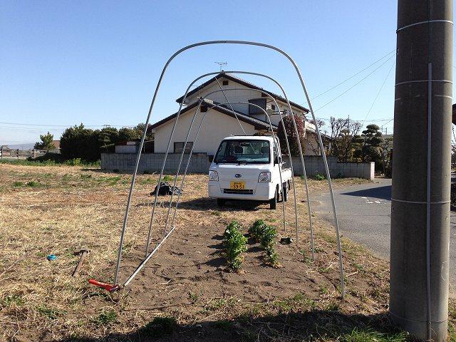 採種ハウス設置