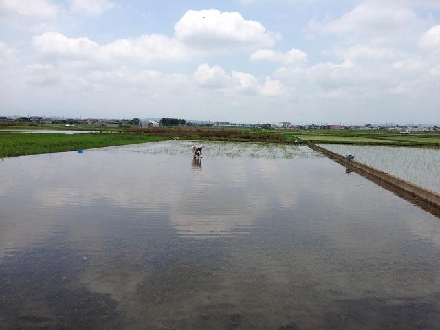 田んぼの除草作業